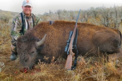 Scott-yearling-bison-or