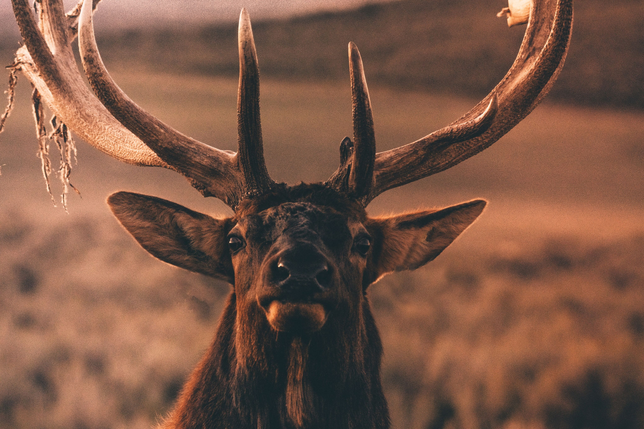 Monster Bull Elk The Hunt of a Lifetime